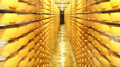 Стелажи с сыром