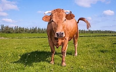 Проблемы внутреннего рынка молока