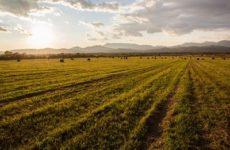 Владельцам «дальневосточного гектара» через 3 года придется подавать декларации об освоении участков