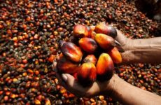 Россельхознадзор хочет взять под контроль пальмовое масло