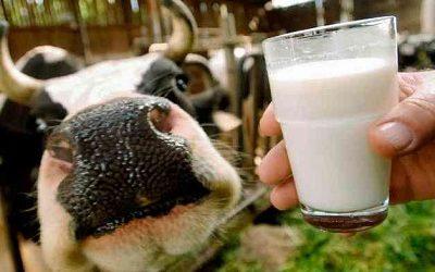 Производители молока в США ищут нестандартные способы поднять продажи