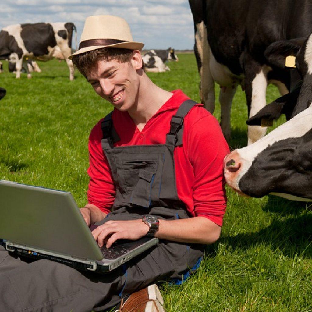 корова и фермер
