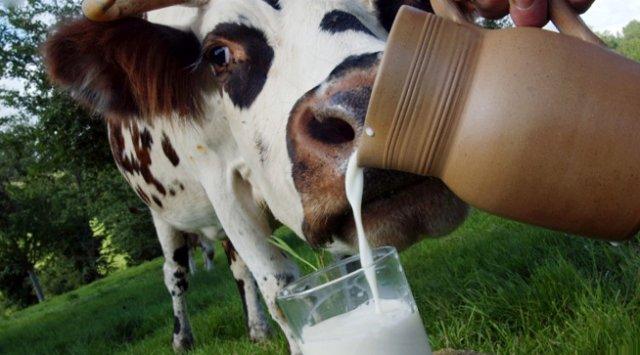 Молочная лихорадка