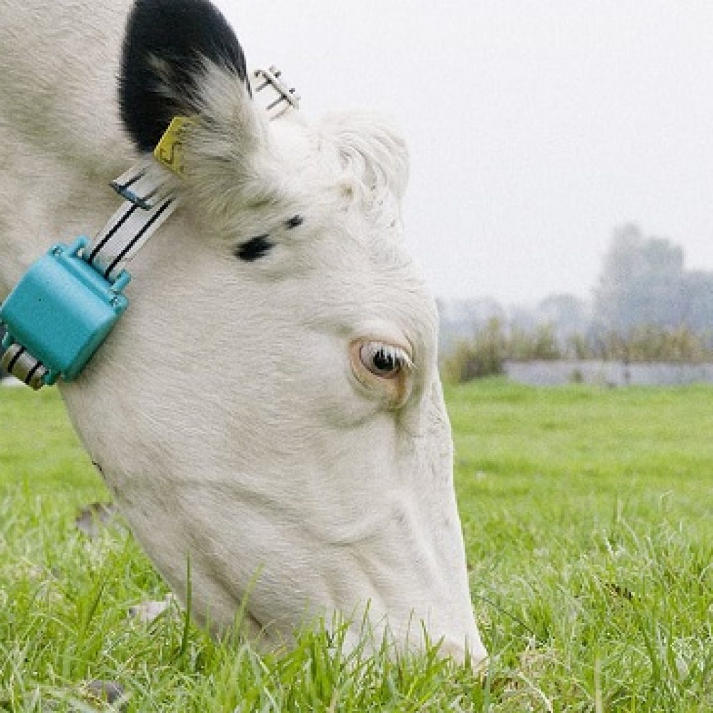 Intelligent Dairy Farmer's Assistant