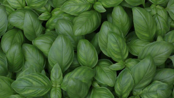 Рынок органических продуктов