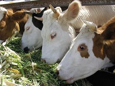 Сельское хозяйство московской области