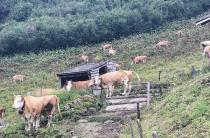 Дневник сыровара: поездка в Альпы и новые открытия