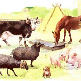 Регистрации животных будет бесплатной