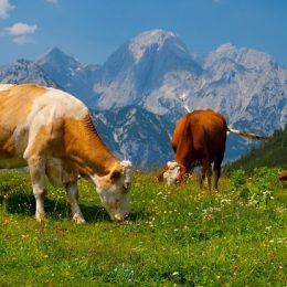 Геномные технологии в животноводстве