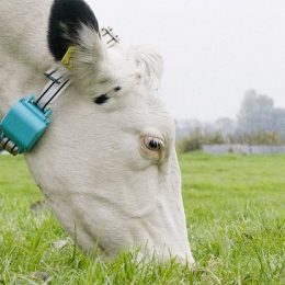 Создатель системы мониторинга состояния коров привлёк €2,5 млн