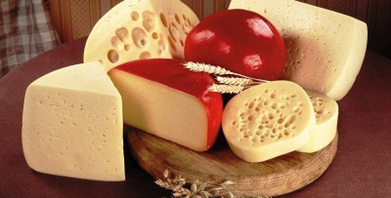 Французские сыроделы разработали новый сорт сыра для предприятия в Алтайском крае