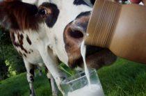 Для продажи коровы потребуется патент