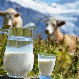 Молоко: интересные факты, о которых вы можете не знать