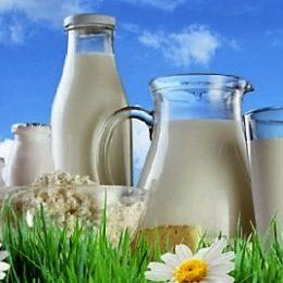 Производство закваски для кисломолочных продуктов