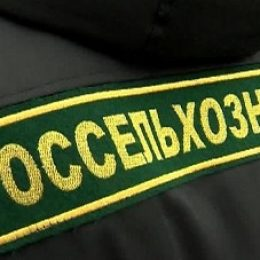 Россельхознадзор усилил контроль за продукцией шести белорусских предприятий