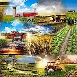 Каждый вложенный в сельское хозяйство доллар приносит тройную выручку