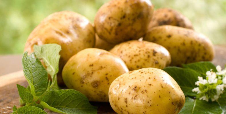 Разработка из Швеции — картофельное молоко