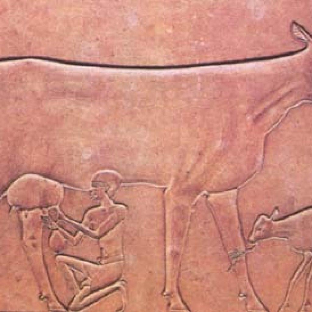 Экскурс в молочную историю