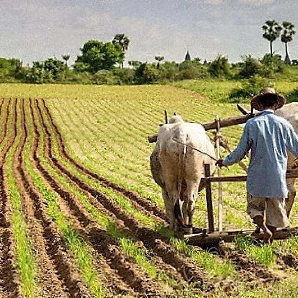 Сельское хозяйство Индии