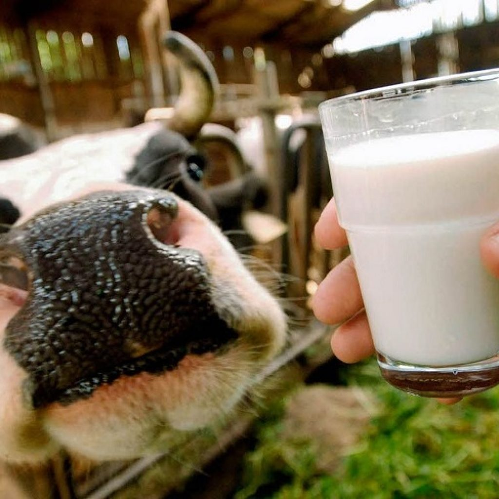 Семинар молочников