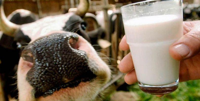 Российско-польский семинар в Польше для специалистов-молочников