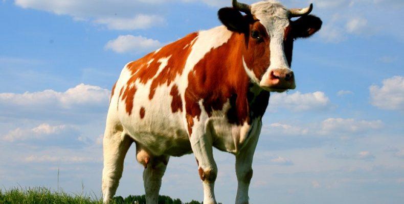 Регулирование числа скота на личных подворьях в Ростовской области