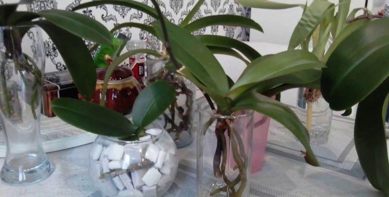 На что обратить внимание при выращивании орхидей?