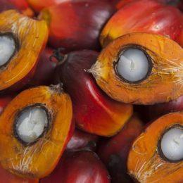 Пальмовый стеарин, или пальмоядровое масло. Пальмоядровое масло: польза и вред
