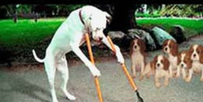 Приучаем собаку к улице