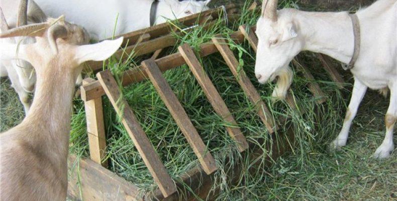Виды кормушек для коз и как их изготовить. Как сделать кормушку для козы своими руками